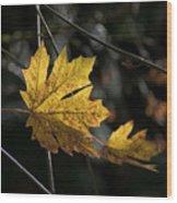Autumn Highlight Wood Print
