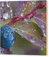 autumn Huckleberry berry and leaves macro in autumn Wood Print