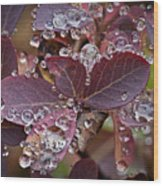autumn Huckleberry leaves macro in autumn Wood Print by Ed Book