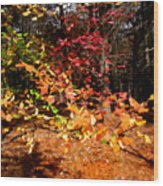 Autumn Hues Wood Print
