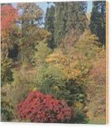 Autumn In Baden Baden Wood Print