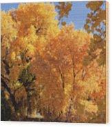 Autumn In Curtin Wood Print