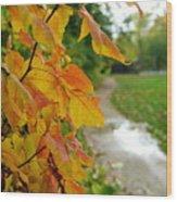 Autumn In Ellenberger Wood Print