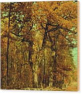 Autumn In Forest Wood Print