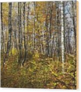 Autumn In The Birches Forest Wood Print
