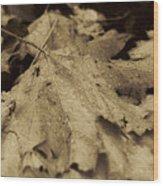 Autumn In Sepia Wood Print