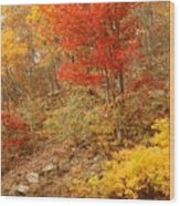 Autumn In Shenandoah Wood Print