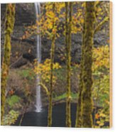 Autumn In Silver Falls Wood Print
