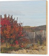 Autumn In The Dunes Wood Print
