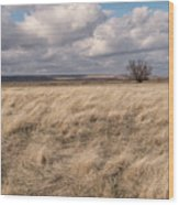 Autumn In The Steppes Wood Print