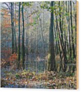 Autumn In The Swamp Wood Print