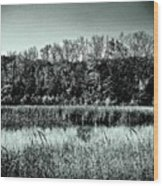 Autumn In The Wetlands - Black And White Wood Print