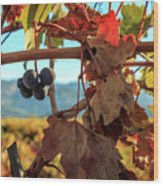 Autumn In The Wine Country Wood Print