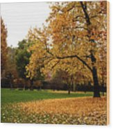 Autumn In Turin, Italy Wood Print