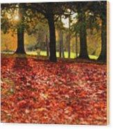 Autumn In Woodthorpe Wood Print