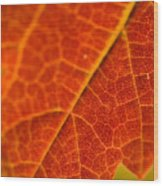Autumn Intensity Wood Print