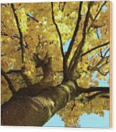 Autumn Is My Favourite Colour Wood Print