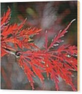 Autumn Japanese Maple Wood Print