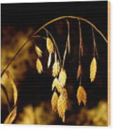 Autumn Jewelery Wood Print