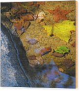 Autumn Jewels Wood Print