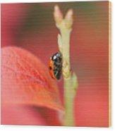 Autumn Ladybird Wood Print