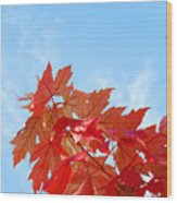 Autumn Landscape Fall Leaves Blue Sky White Clouds Baslee Wood Print
