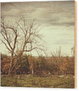 Autumn Landscape In Late November Wood Print by Sandra Cunningham