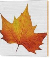 Autumn Leaf 1 Wood Print