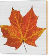 Autumn Leaf 3 Wood Print