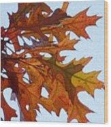 Autumn Leaves 21 Wood Print