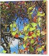 Autumn Leaves 243 L Wood Print
