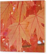Autumn Leaves Art Prints Orange Fall Leaves Baslee Troutman Wood Print