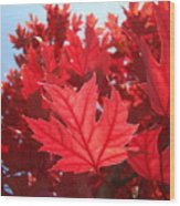 Autumn Leaves Fall Art Bright Red Leaves Baslee Troutman Wood Print