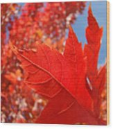 Autumn Leaves Fall Art Red Orange Leaves Blue Sky Baslee Troutman Wood Print