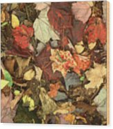 Colorful Autumn Leaves In Blue Green Red Yellow Orange Wood Print