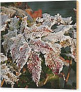 Autumn Leaves In A Frozen Winter World Wood Print