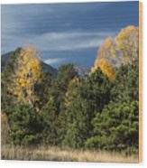 Autumn Leaves In Hart Prairie Wood Print