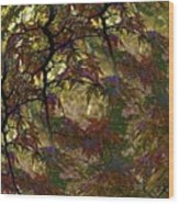 Autumn Leaves In Kyoto Wood Print
