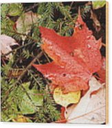Autumn Leaves Wood Print by Larry Ricker