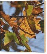 Autumn Leaves Macro 1 Wood Print