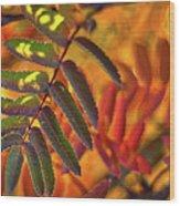 Autumn Leaves - Patagonia Wood Print