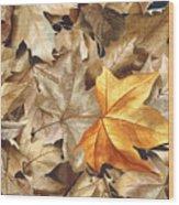 Autumn Leaves Series 2 Wood Print