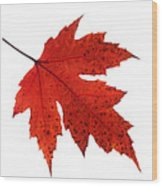 Autumn Leaves Triptych Wood Print