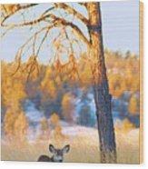 Autumn Light ... Montana Art Photo Wood Print