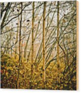 autumn Lines Wood Print