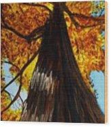 Autumn Majesty Wood Print