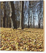Autumn Maple Forest - Massachusetts Usa Wood Print