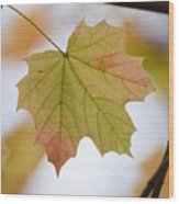 Autumn Maple Leaf Vertical Wood Print