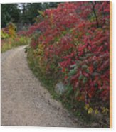 Autumn Mesa Trail Wood Print