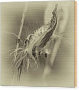 Autumn Milkweed 7 - Sepia Wood Print